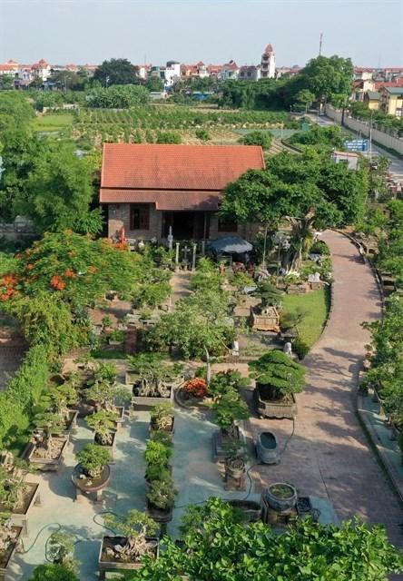 Plantas ornamentales entre principales productos agricolas de Hanoi hinh anh 1