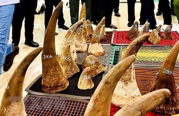 Vietnam entrega a Sudafrica muestras de ADN de cuernos de rinoceronte hinh anh 1