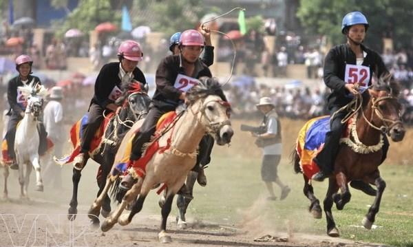 Carrera de caballos Bac Ha nombrada Patrimonio cultural intangible de Vietnam hinh anh 3