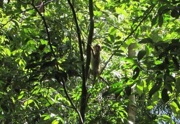 Liberan en Vietnam animales salvajes raros a bosque hinh anh 1