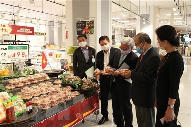 Buscan promover cooperacion entre Vietnam y prefectura japonesa de Kagoshima hinh anh 1