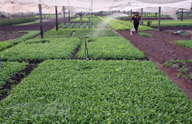 Hanoi desarrolla la industria de procesamiento de productos agricolas hinh anh 1