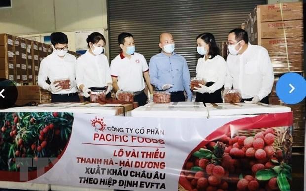 Vietnam exporta por primera vez lichi al mercado europeo bajo el EVFTA hinh anh 1