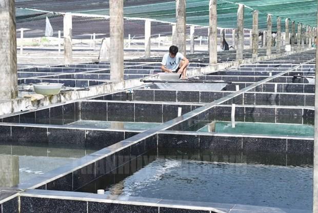 Ciudad Ho Chi Minh promueve uso de alta tecnologia en cooperativas agricolas hinh anh 1