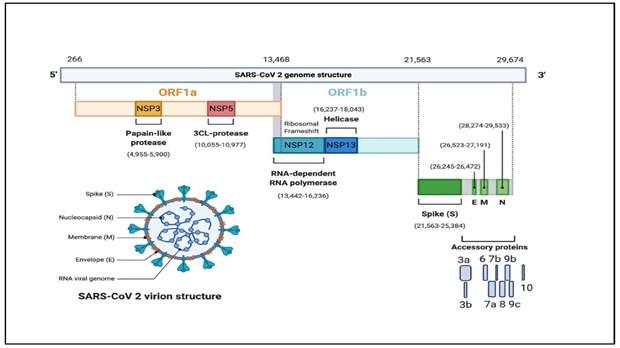 Vietnam logra secuenciar el genoma del virus SARS-CoV-2 hinh anh 1