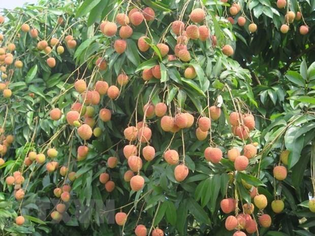 Vietnam estimula consumo de productos agricolas de localidades afectadas por el COVID-19 hinh anh 1