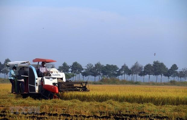 Vietnam por convertirse en suministrador global responsable de alimentos hinh anh 1