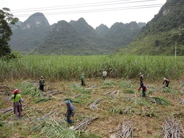Aplica Vietnam impuesto antidumping al azucar tailandesa hinh anh 1