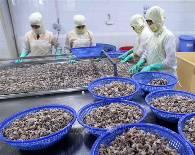 Aumentan exportaciones vietnamitas de calamares y pulpos a China hinh anh 1