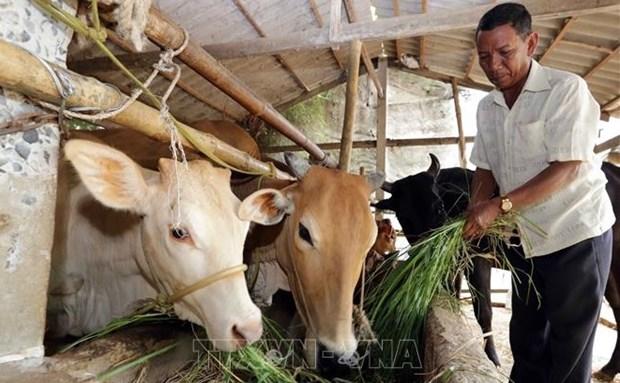 Vietnam avanza en reduccion de la pobreza multidimensional hinh anh 1