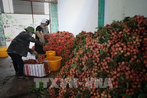 Lichis vietnamitas llegan a mercado europeo a traves de plataforma de comercio electronico hinh anh 1