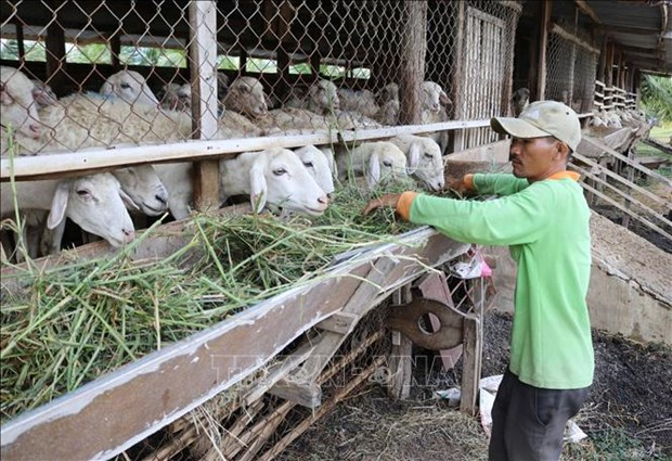 Empenado Vietnam en mejorar nivel de vida de minorias etnicas hinh anh 2
