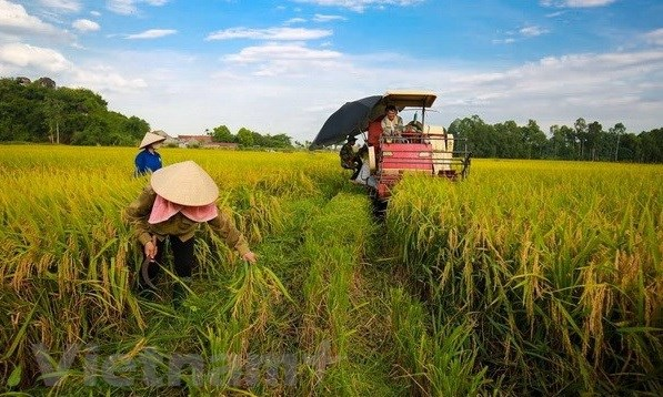 Banco Mundial dispuesto a apoyar a proyectos de desarrollo agricola de Vietnam hinh anh 1