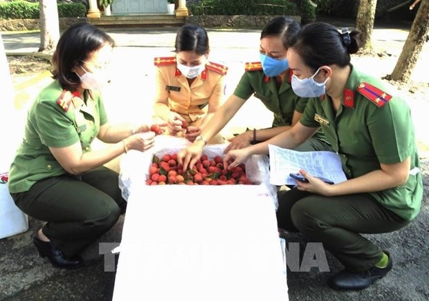 Provincia vietnamita promueve consumo de lichi domestico hinh anh 1