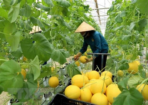Intensifica Australia apoyo a agricultura de alta tecnologia de Vietnam hinh anh 1