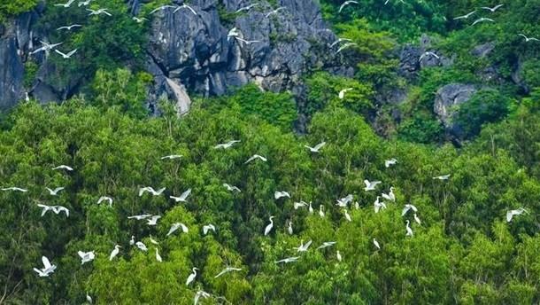 Vietnam promueve cooperacion con Fondo Mundial para la Naturaleza hinh anh 1