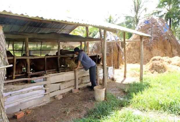 Provincia vietnamita de Soc Trang desarrolla industria ganadera hinh anh 1