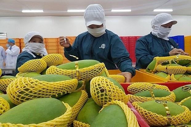 Exportaciones hortofruticolas de Vietnam superaran los cuatro mil millones de dolares hinh anh 1