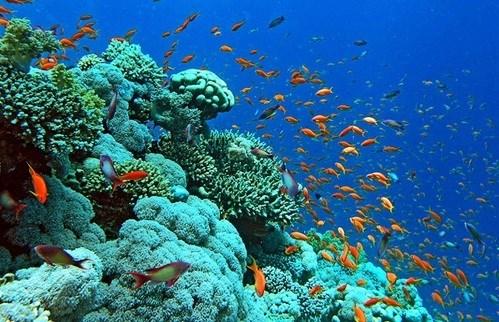 Restauran y protegen los ecosistemas de arrecifes de coral en Bahia de Ha Long hinh anh 2