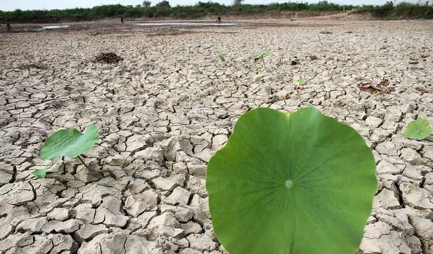 Cambio climatico afecta a gran parte de la poblacion de Camboya hinh anh 1