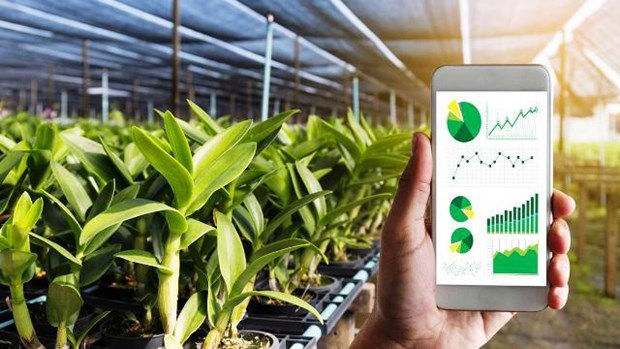 Provincia vietnamita de Vinh Phuc promueve transformacion digital en la agricultura hinh anh 1