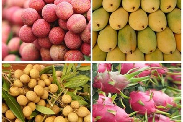 Robustecen Vietnam y China cooperacion en agricultura y consumo de frutas hinh anh 2