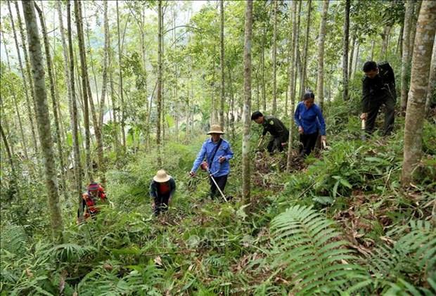Vietnam implementara programa de desarrollo forestal sostenible para 2021-2025 hinh anh 1