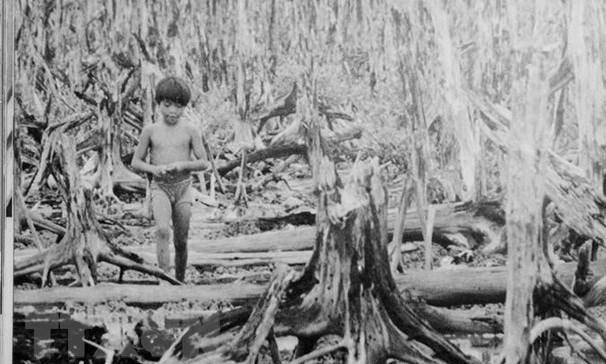 60 anos de desastre del Agente Naranja en Vietnam: la guerra catastrofica hinh anh 1
