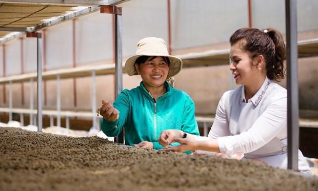 Empresa vietnamita de cafe busca conectar a proveedores agropecuarios hinh anh 1