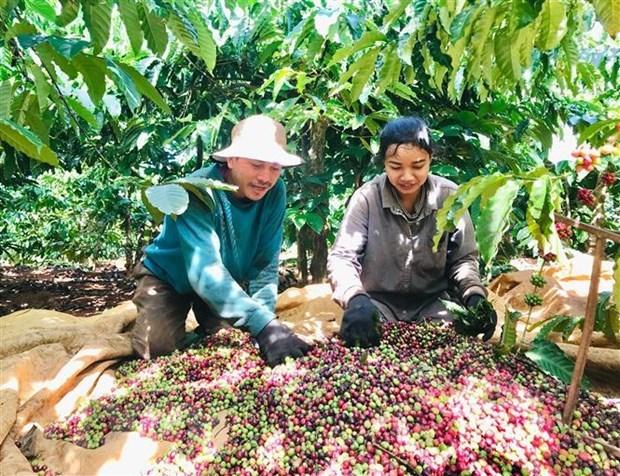 Vietnam promueve exportacion de productos agricolas y acuaticos a Argelia y Senegal hinh anh 1