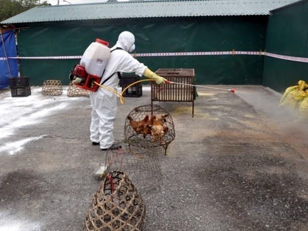 Provincia vietnamita de Thai Binh controla brote de gripe aviar A/H5N8 hinh anh 1