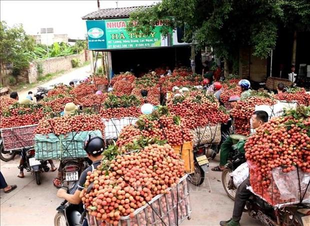 Vietnam y China trabajan por aliviar barreras en comercio agropecuario hinh anh 1