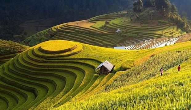 Recorren los arrozales patrimoniales de Hoang Su Phi a traves de la pantalla hinh anh 2