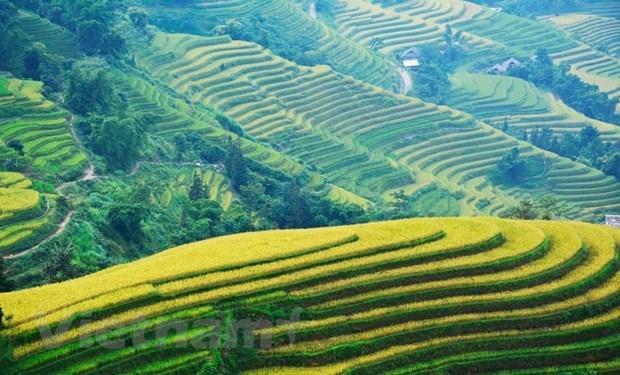 Recorren los arrozales patrimoniales de Hoang Su Phi a traves de la pantalla hinh anh 1