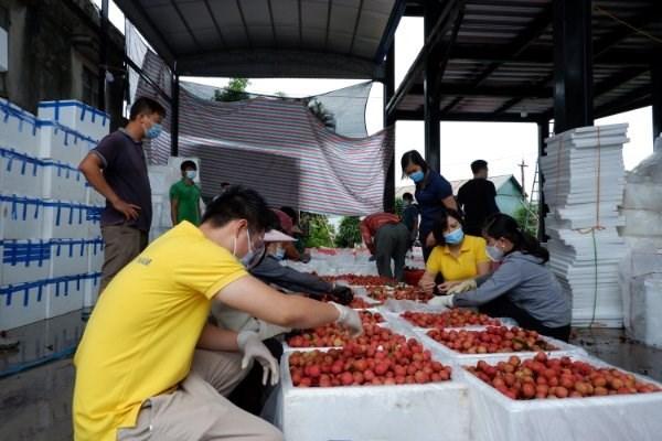 Vietnam planea conectar a cinco millones de agricultores con plataformas de comercio electronico hinh anh 1