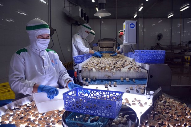 Crecen en exportaciones acuicolas de Vietnam a pesar de los impactos del COVID-19 hinh anh 1