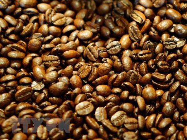 Aumenta precio de exportacion de cafe arabica de Vietnam hinh anh 1