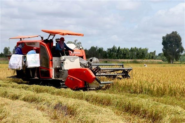 Economias de APEC trabajan por garantizar la seguridad alimentaria hinh anh 1