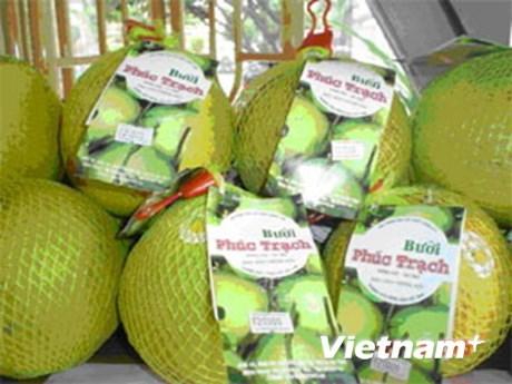 Pomelo vietnamita Phuc Trach para la venta en linea hinh anh 1