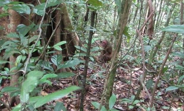 Provincia vietnamita libera especies salvajes en su habitat natural hinh anh 1