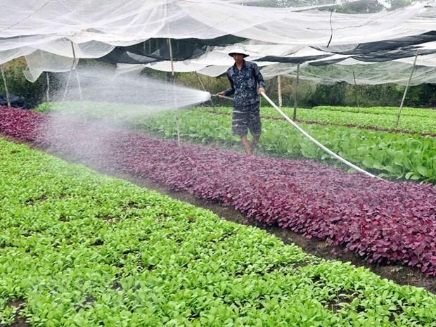 Preve Hanoi tres escenarios de crecimiento para sector agropecuario y rural en 2021 hinh anh 1