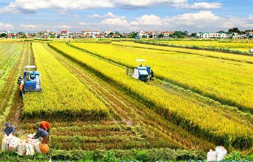 Region surena de Vietnam se prepara para produccion agricola en nueva situacion hinh anh 1