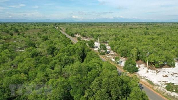 Vietnam y Finlandia fortalecen cooperacion en desarrollo de cooperativas forestales hinh anh 1