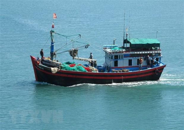 Provincia vietnamita trabaja para solventar tarjeta amarilla de Comision Europea al sector pesquero hinh anh 1