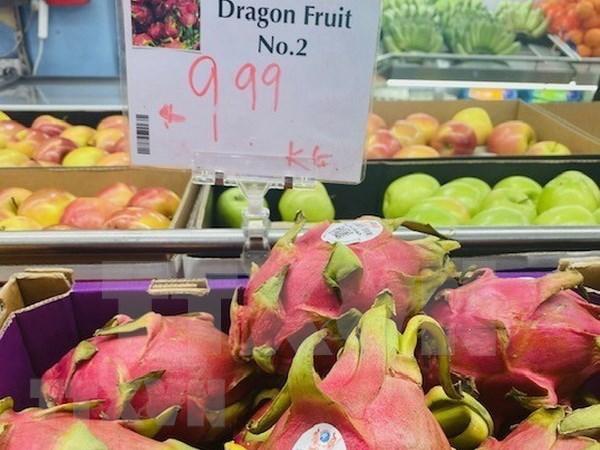 Pitahaya vietnamita goza de alta valoracion en Australia hinh anh 1