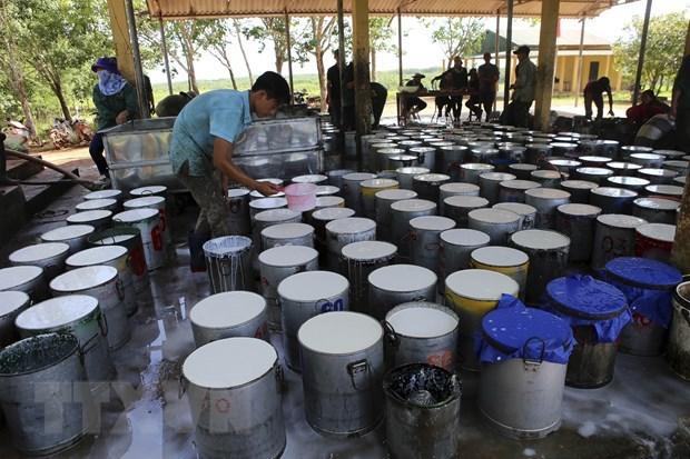 Vietnam en undecimo lugar en lista de proveedores de caucho de Estados Unidos hinh anh 1