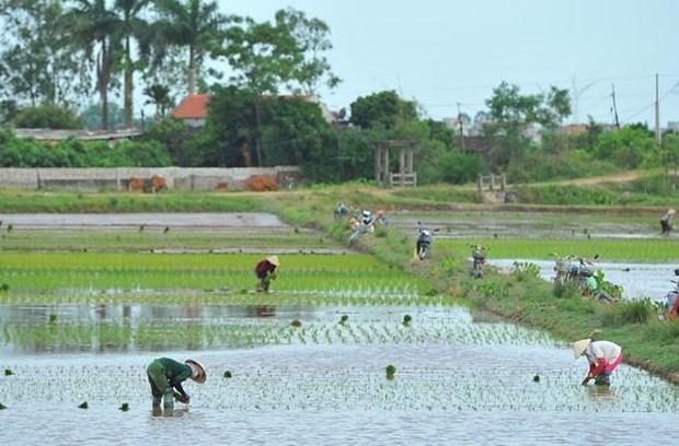 Ninh Binh: Esfuerzos de construccion de nueva ruralidad resultan fructiferos hinh anh 1