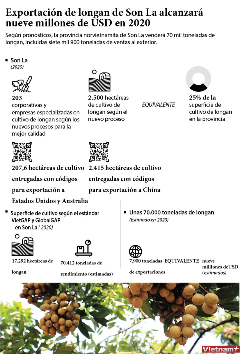Exportacion de longan de Son La alcanzara nueve millones de USD en 2020 hinh anh 1