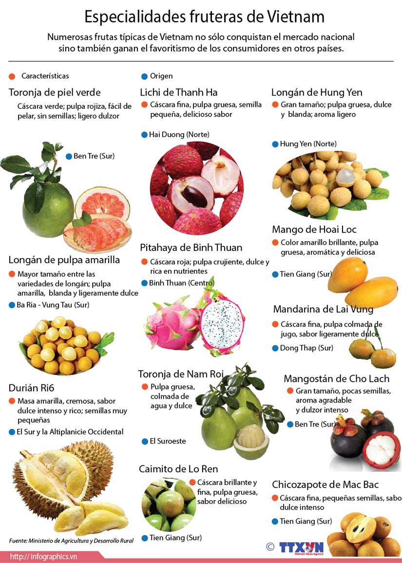 [Infografia] Especialidades fruteras de Vietnam hinh anh 1