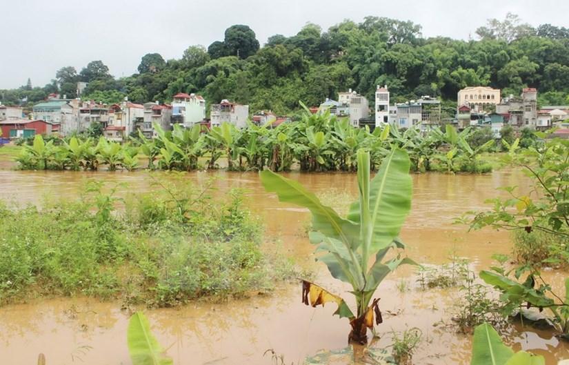 Diversas areas en la provincia nortena de Son La anegadas por inundaciones hinh anh 5
